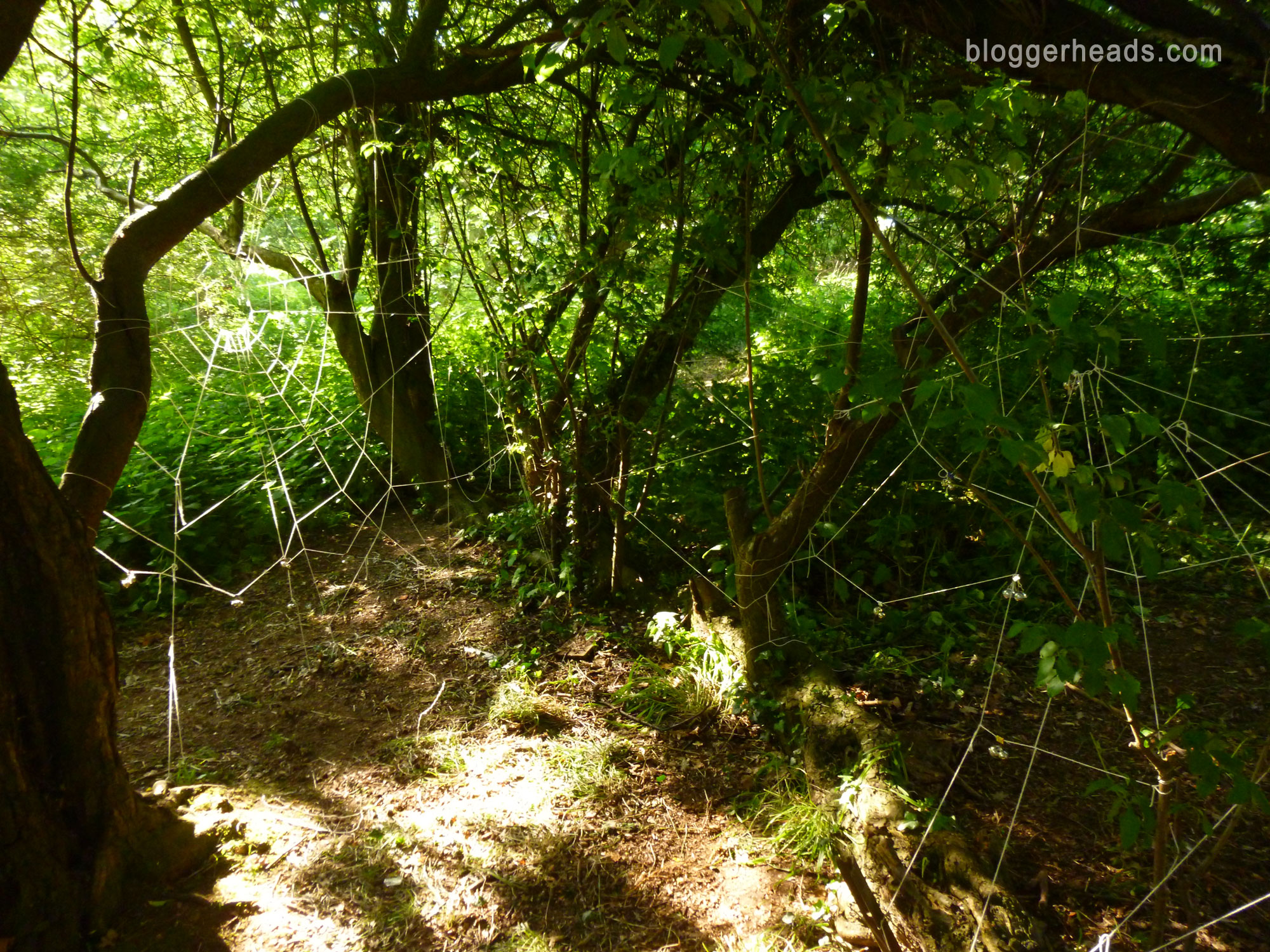 Spider Web Obstacle 1