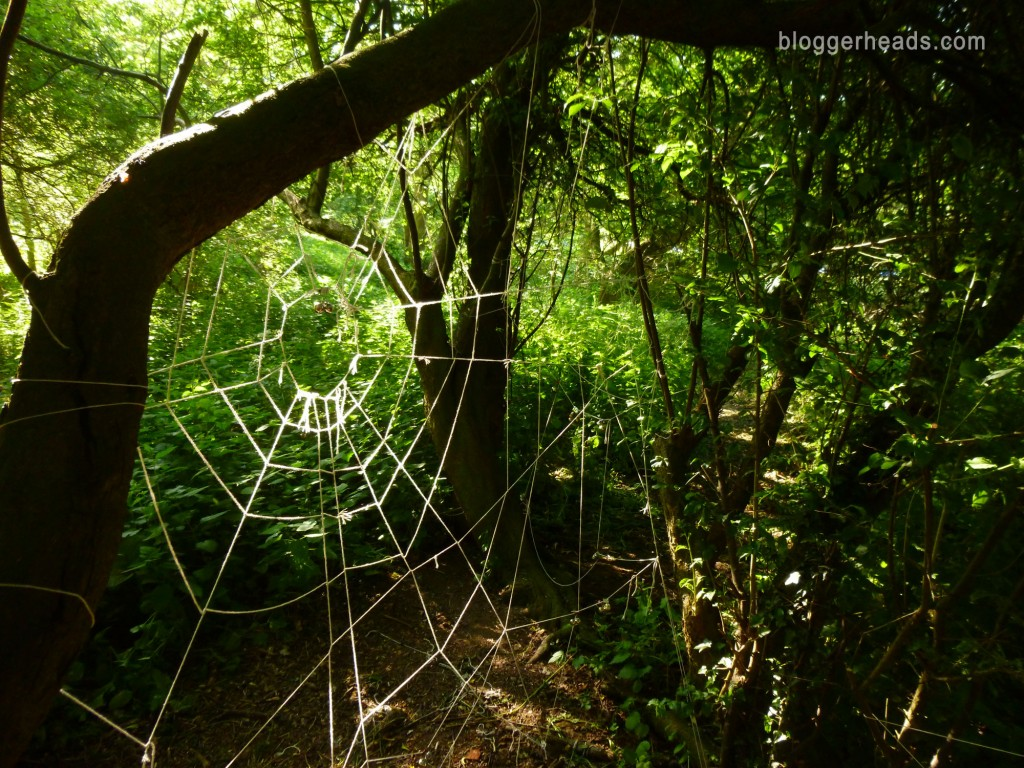 Detail: Spider Web Obstacle