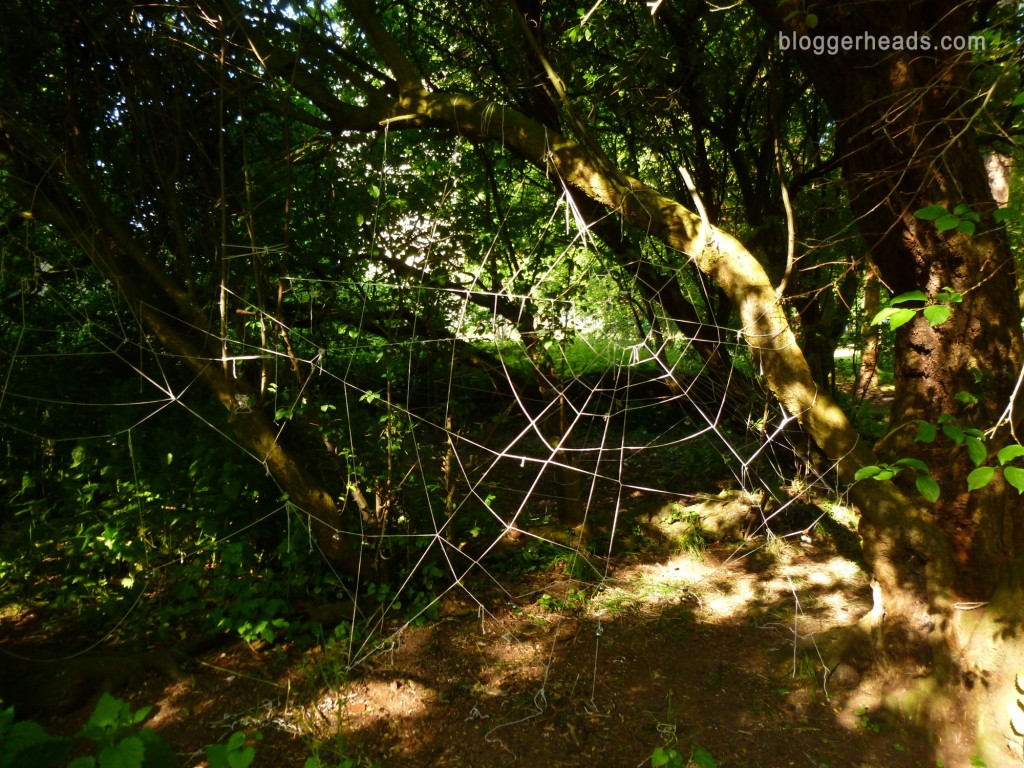 Spider Web Obstacle 4
